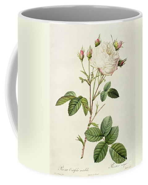 Rosa Coffee Mug featuring the drawing Rosa Centifolia Mutabilis by Pierre Joseph Redoute