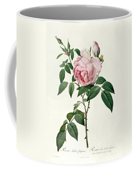 Rosa Coffee Mug featuring the drawing Rosa Chinensis And Rosa Gigantea by Joseph Pierre Redoute