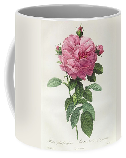 Rosa Coffee Mug featuring the drawing Rosa Gallica Flore Giganteo by Pierre Joseph Redoute