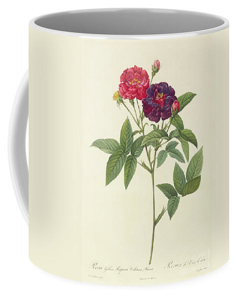 Rosa Coffee Mug featuring the drawing Rosa Gallica Purpurea Velutina by Pierre Joseph Redoute