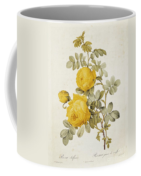 Rosa Coffee Mug featuring the drawing Rosa Sulfurea by Pierre Redoute