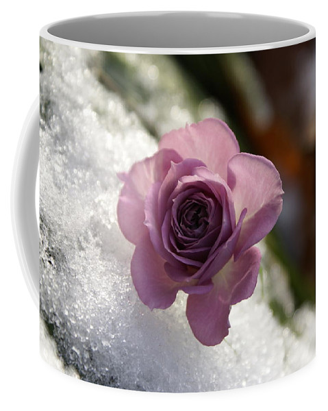 Flower Coffee Mug featuring the photograph Rose And Snow by Heidi Poulin