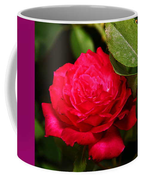 Flower Coffee Mug featuring the photograph Rose by Anthony Jones
