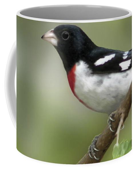 Nature Coffee Mug featuring the digital art Rose Breasted Grosbeak by Barbara Hymer