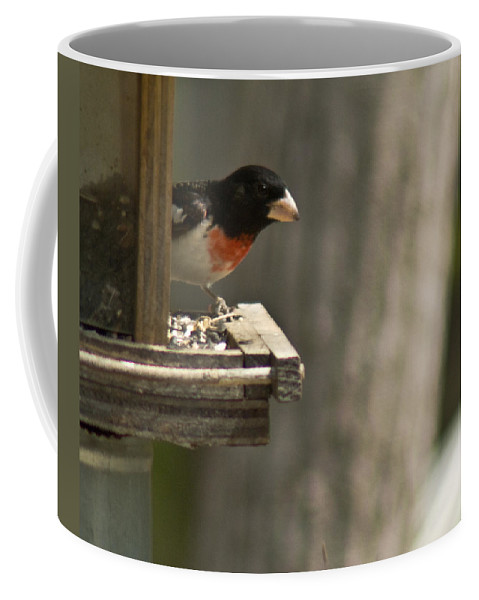 Rose Coffee Mug featuring the photograph Rose Breasted Grosbeak Feeding by Douglas Barnett
