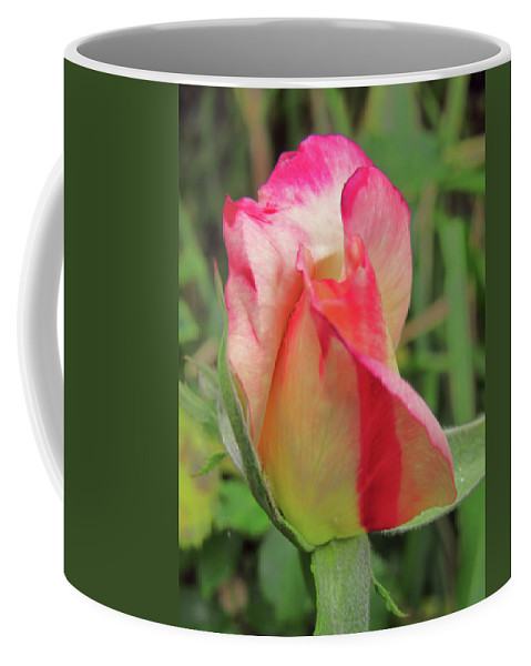 Pamela Walton Coffee Mug featuring the photograph Rose Bud by Pamela Walton