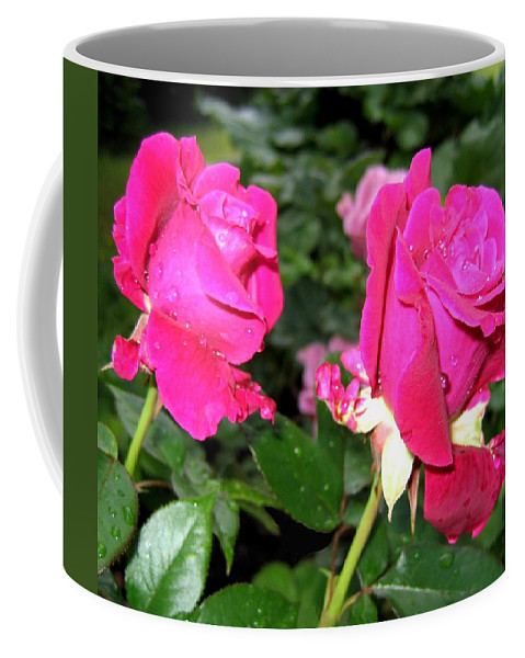 Roses Coffee Mug featuring the photograph Rose Duo by Will Borden