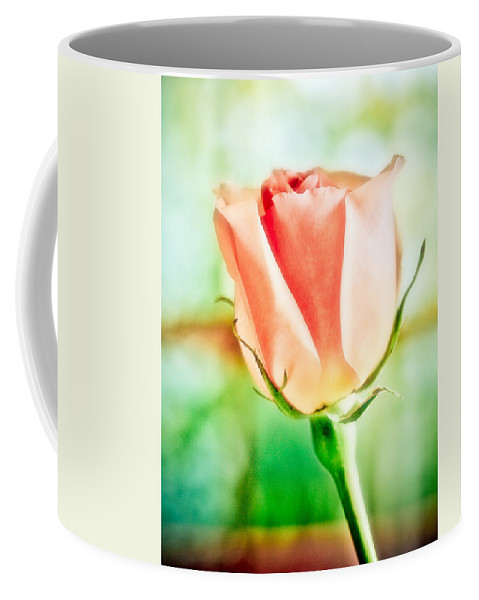 Rose Coffee Mug featuring the photograph Rose In Window by Marilyn Hunt
