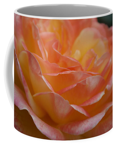 Yellow And Pink Rose Coffee Mug featuring the photograph Rose In Yellow And Pink I by Jacqueline Russell