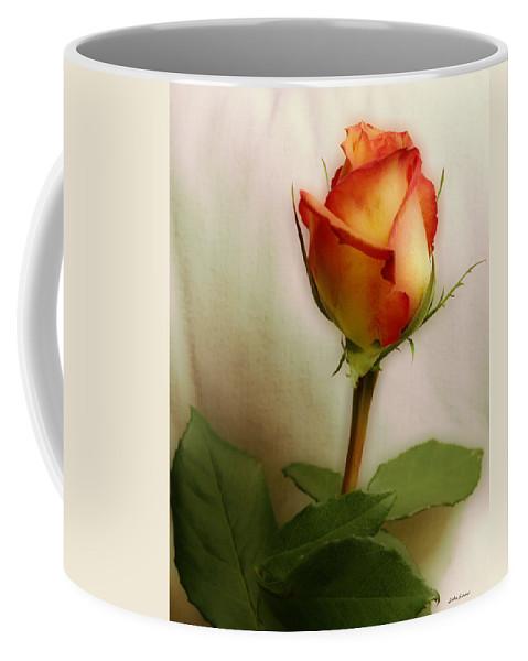 Rose Coffee Mug featuring the photograph Rose by Linda Sannuti