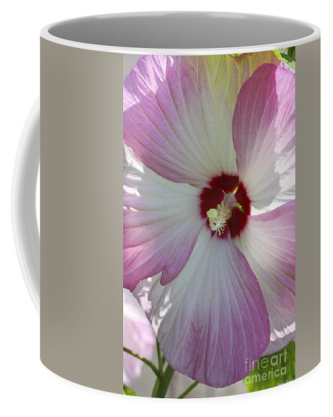 Flower Coffee Mug featuring the photograph Rose Of Sharon by Deborah Benoit