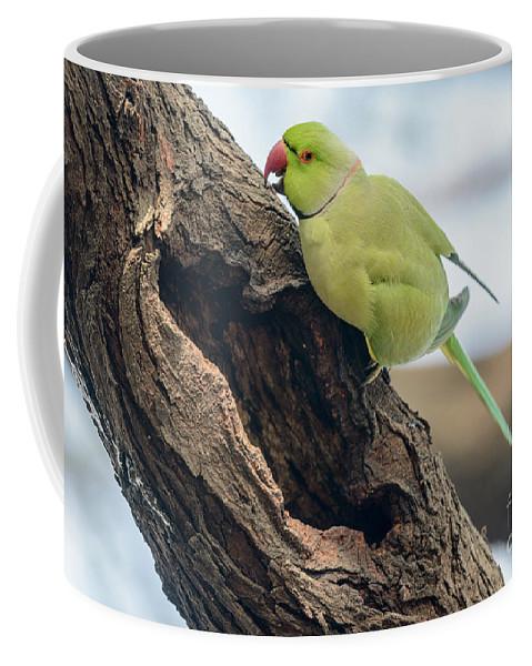 Bird Coffee Mug featuring the photograph Rose-ringed Parakeet 03 by Werner Padarin