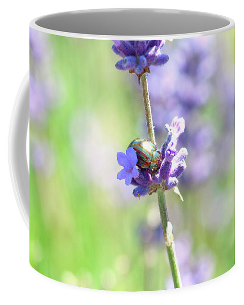 Lavender Coffee Mug featuring the photograph Rosemary And Lavender by Bonnita Moaby