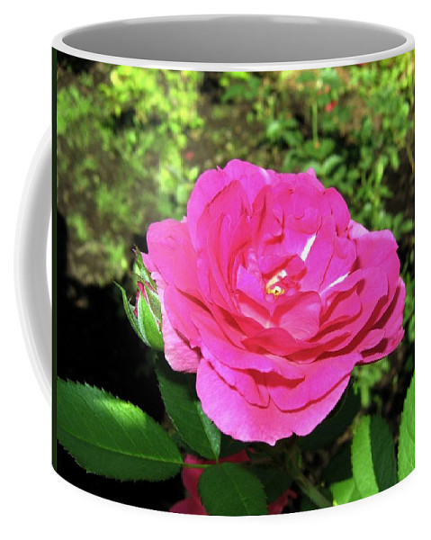 Rose Coffee Mug featuring the photograph Roses 10 by Will Borden