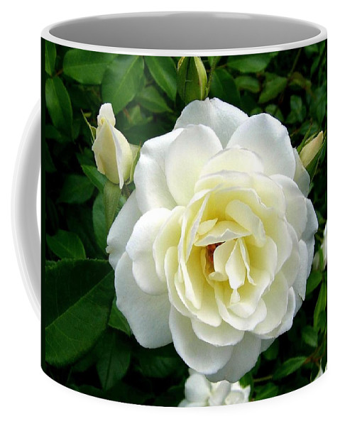 Rose Coffee Mug featuring the photograph Roses 2 by Will Borden