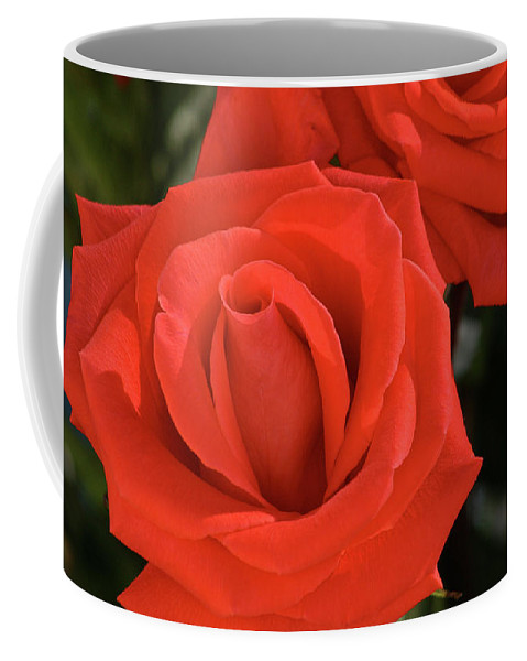 Rose Coffee Mug featuring the photograph Roses-5814 by Gary Gingrich Galleries
