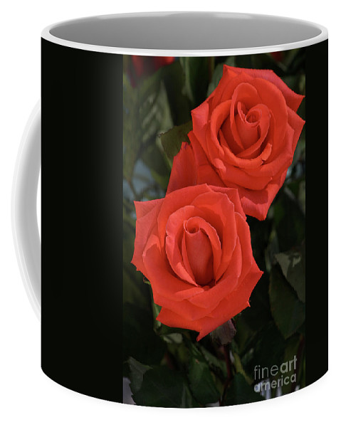 Rose Coffee Mug featuring the photograph Roses-5840 by Gary Gingrich Galleries