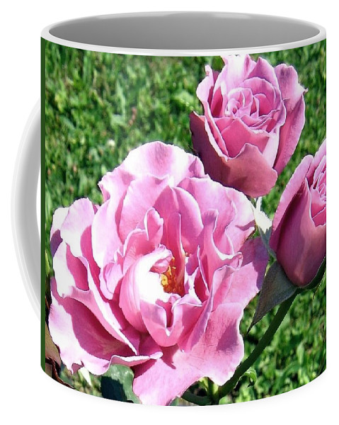Roses Coffee Mug featuring the photograph Roses 6 by Will Borden