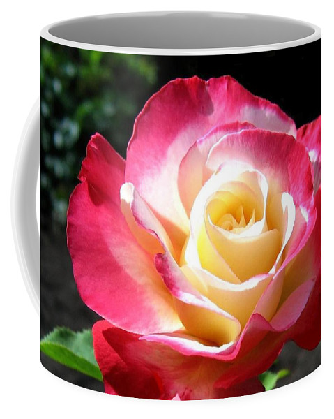 Rose Coffee Mug featuring the photograph Roses 7 by Will Borden