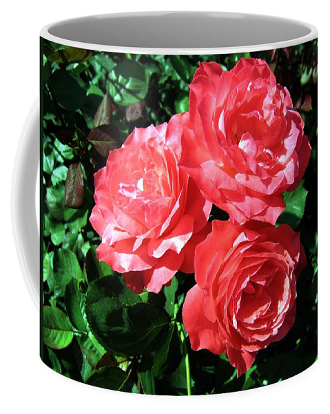 Roses Coffee Mug featuring the photograph Roses 9 by Will Borden