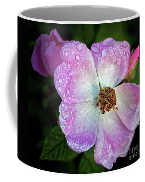 Roses Coffee Mug featuring the photograph Roses After The Rain by Emma England