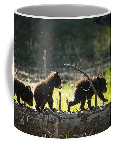 Black Bear Coffee Mug featuring the photograph Rosie And Cubs by Max Waugh