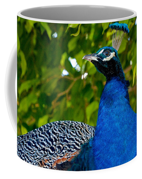 Avian Coffee Mug featuring the photograph Royal Bird by Christopher Holmes