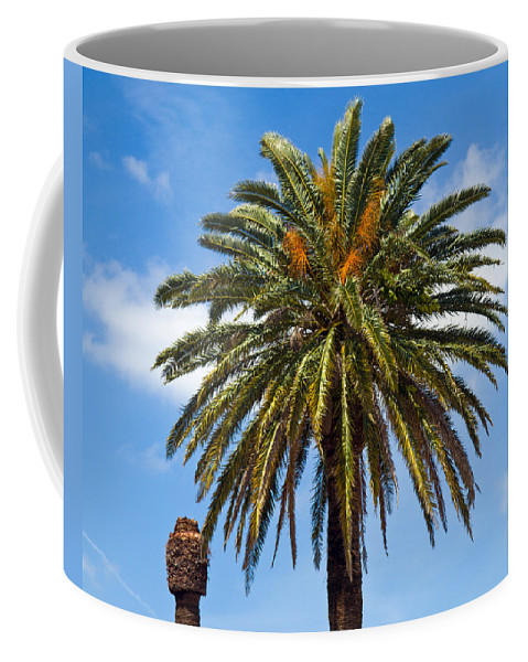 Palm; Tree; Royal; Queen; Scepter; Florida; Frond; Saw; Palmetto; Branch; Wave; Wind; Breeze; Scrub; Coffee Mug featuring the photograph Royal Palm In Florida by Allan Hughes