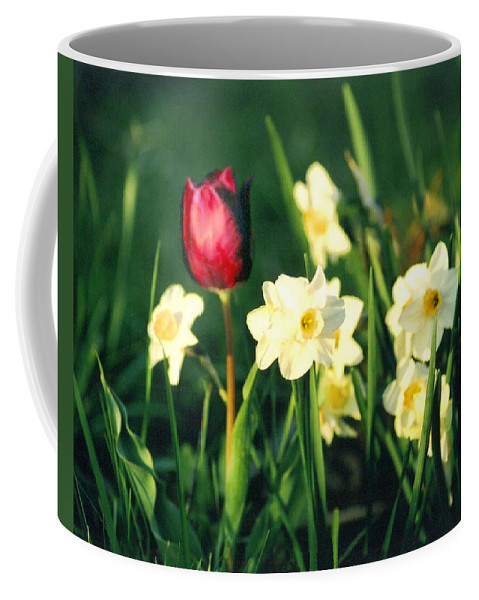 Tulips Coffee Mug featuring the photograph Royal Spring by Steve Karol