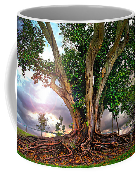 Rubber Tree Coffee Mug featuring the photograph Rubber Tree by Mal Bray