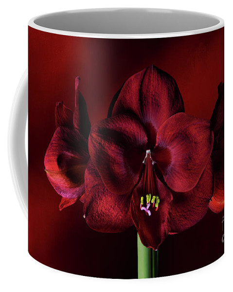 Red Amaryllis Coffee Mug featuring the photograph Ruby Red Amaryllis by Ann Garrett