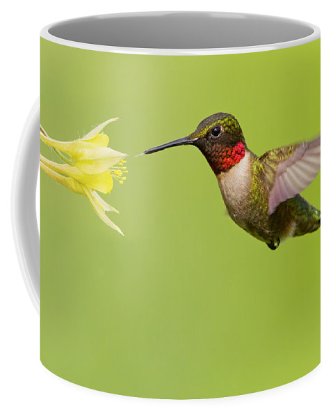 Ruby Coffee Mug featuring the photograph Ruby-throated Hummingbird by Mircea Costina Photography