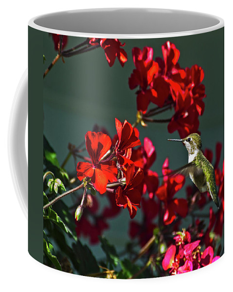 Rufous Hummingbird (selasphorus Rufus) Sunrise Coffee Mug featuring the photograph Rufus Humming Bird At Sunrise by Rob Mclean