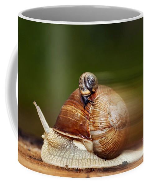 Runaway Snail Coffee Mug featuring the photograph Runaway Snail by Michal Boubin