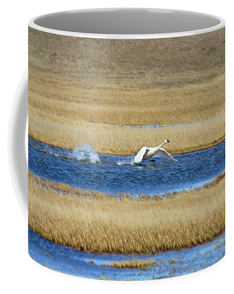 Swan Coffee Mug featuring the photograph Running On Water by Anthony Jones