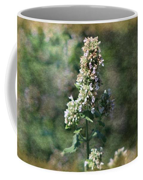 Calliste Coffee Mug featuring the photograph Rustic Weathered Calliste Green Wild Mint by Colleen Cornelius