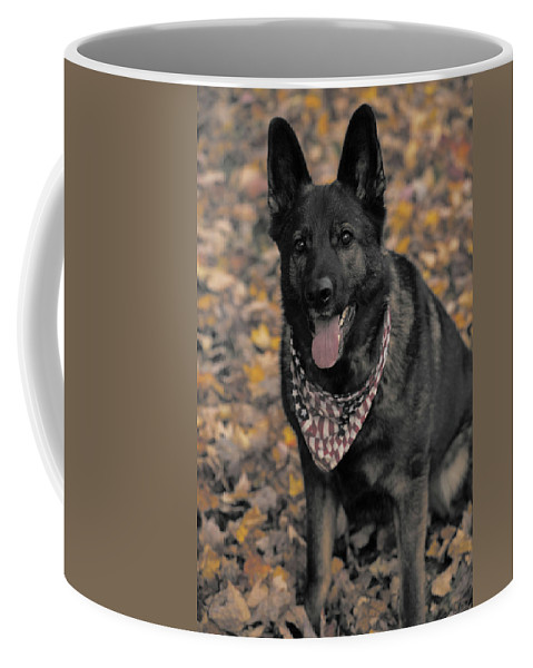 Dog Coffee Mug featuring the photograph Saber In Autumn by Karol Livote