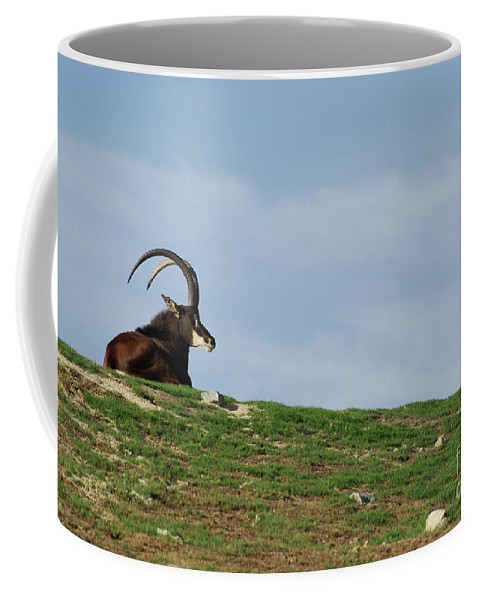 Sable Coffee Mug featuring the photograph Sable Antelope On Hill by Jim And Emily Bush
