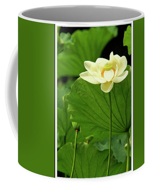 Recent Coffee Mug featuring the photograph Sacred Lotus In Black Frame by Geraldine Scull