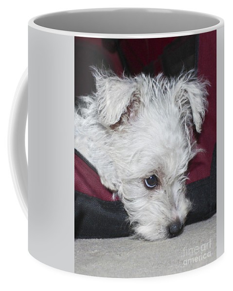 White Coffee Mug featuring the photograph Sad Puppy by Terri Waters