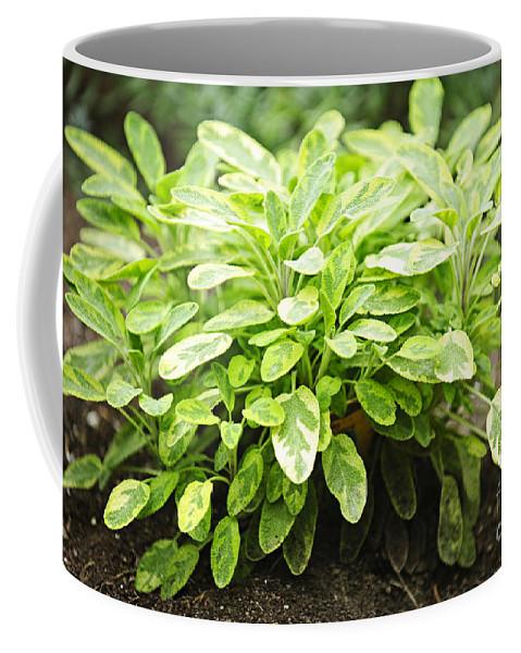 Sage Coffee Mug featuring the photograph Sage Plant by Elena Elisseeva