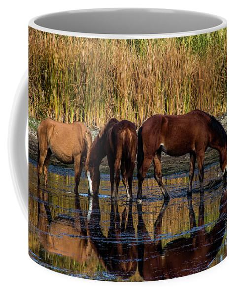 Arizona Coffee Mug featuring the photograph Salt River Horses by Kathy McClure
