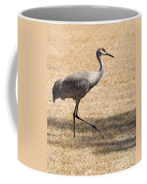 Crane Coffee Mug featuring the photograph Sand Hill Cranes by Thomas Marchessault