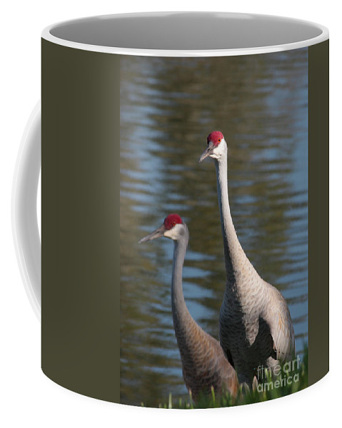 Sandhill Cranes Coffee Mug featuring the photograph Sandhill Crane Couple By The Pond by Carol Groenen