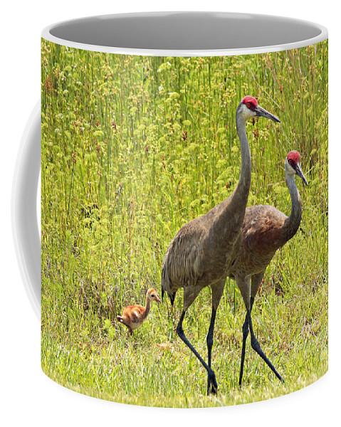 Sandhill Cranes Coffee Mug featuring the photograph Sandhill Crane Family by Carol Groenen