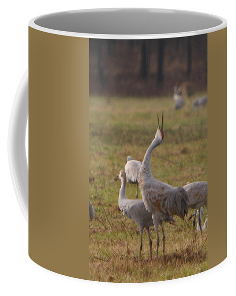 Sandhill Crane Birds Mating Calliing Nature Wildlife Photography Photograph Coffee Mug featuring the photograph Sandhill Delight by Shari Jardina