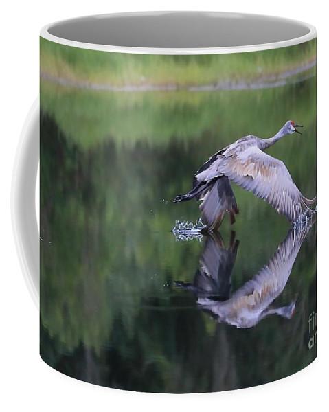 Sandhill Crane Coffee Mug featuring the photograph Sandhill Retreat by Carol Groenen
