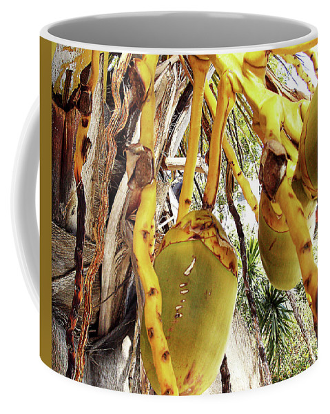 Florida Coffee Mug featuring the photograph Sanibel Coconuts Gp by Chris Andruskiewicz