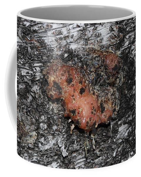 Sap Coffee Mug featuring the photograph Sap Of The Tree by Rob Hans