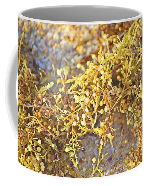Seaweed Coffee Mug featuring the photograph Sargassum Seaweed by Kenneth Albin